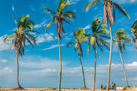 Exotic coast of the Dominican Republic with exotic palm trees on the golden sand, Caribbean Islands photo