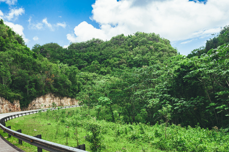 Beautiful vibrant background consisting of trees of the rain forest of Central America. Typical landscape of Dominican republic, Guatemala, Costa Rica Stock Photo