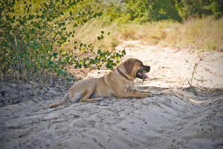 Happy dog running outdoor.