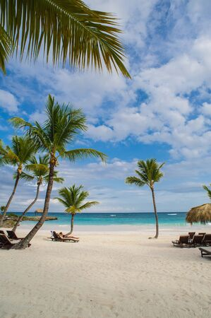 Palm and tropical beach in Tropical Paradise. Summertime holiday in Dominican Republic, Seychelles, Caribbean, Philippines, Bahamas. Relaxing on remote Paradise beach. Luxury Resort on Atlantic ocean.