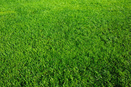 Green grass background texture. Element of design. Standard-Bild