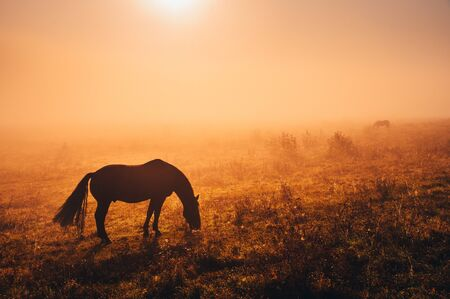 Dark Horse silhouette. Wild animal grassing on autumn meadow in warm sunrise light Reklamní fotografie