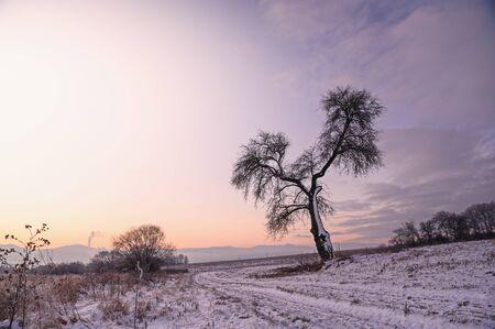 Tree silhouette in winter morning. Orange light, edit space