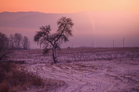 Tree in frozen colorful winter landscape, orange and red edit space.