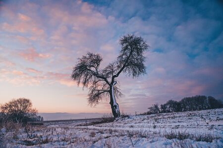 Alone tree, colorful sky in background, photo with edit space.