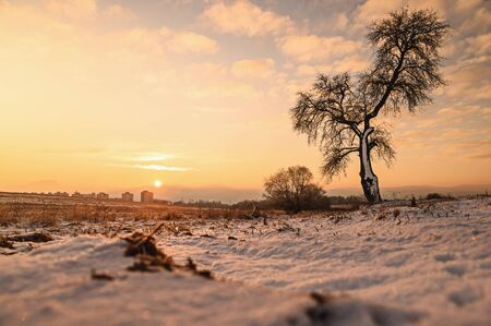 Alone tree in orange winter nature, edit space