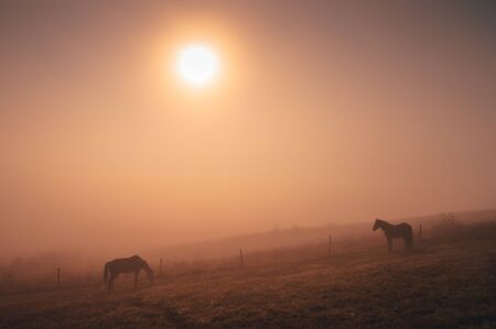Horses grassing together in autumn summer morning, calm, nostalgic mood, edit space
