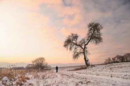 Hiker walk alone in winter nature, man standing under the big solitaire tree