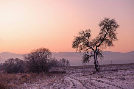 Alone tree in winter morning. Soft sunrise light in background. 版權商用圖片