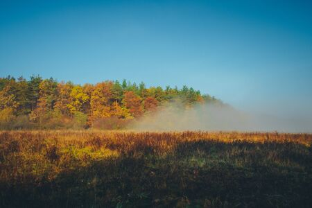 Morning autumn landscape. Colorful trees and mist,