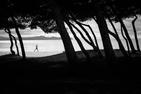Silhouette of runner running on the beach. Silhouette of trees. in front of the photo. Edit space 스톡 콘텐츠