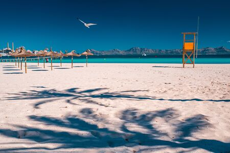 Beautiful summer vacation photo. Seagull fly over the sunny sandy beach in summer vacation resort.