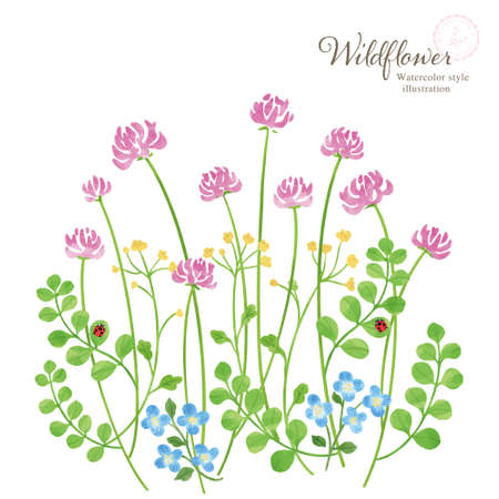 Illustration of spring wildflowers Hand drawn illustration with watercolor touch Ilustração