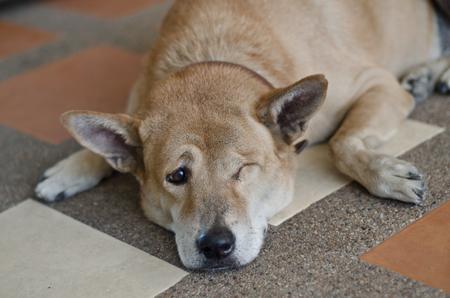 one eye: dog have one eye sad