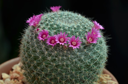 Cactus Flower Blooming Outdoors Stock Photo