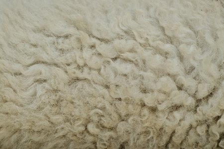 furry stuff: The manufactured skin of a sheep.Wool sheep closeup for background.