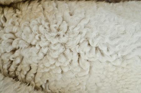 sheepskin: sheepskin texturel background