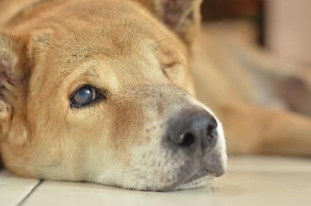 The Dog sad