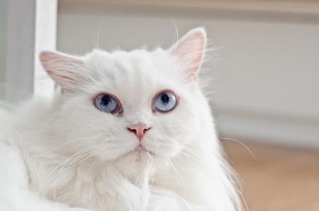 perro asustado: gato