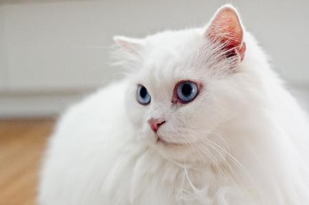 adentro y afuera: gato asustado