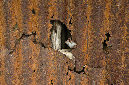 zinc: Zinc old metal wall background.