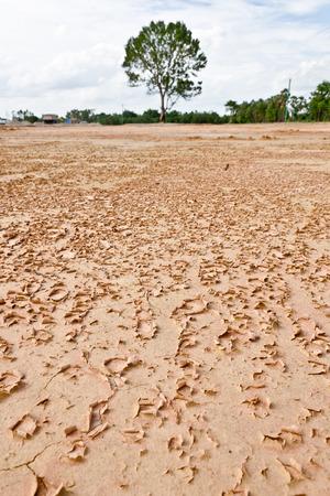 mundo contaminado: Las grietas del suelo secado en temporada árida, tienen de fondo de árboles fuera de foco. Foto de archivo