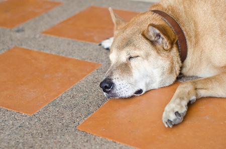 cuddly baby: dog sleep