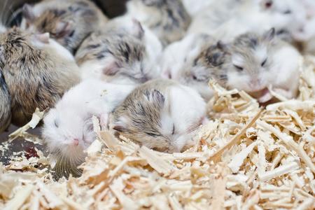 Hamsters sleep
