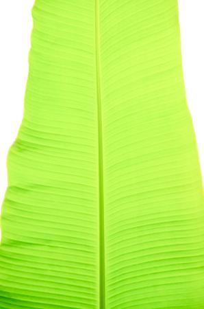 banana leaf pattern have green color,for background