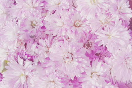 Unfocused blur flower petals,Summer blossoming delicate flower on blooming flowers festive background, pastel and soft bouquet floral card