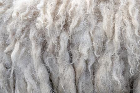 Wol schapen close-up voor achtergrond, ruwe wol achtergrond. Ook zachtheid, warmte concept.