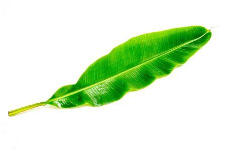 tropical banana leaf texture, large palm foliage nature on white background.