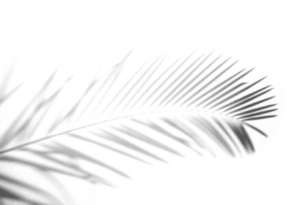 Abstract Shadow. blurred shadows palm leaves background. gray leaves that reflect concrete walls on a white wall surface for blurred backgrounds and monochrome wallpapers Banco de Imagens