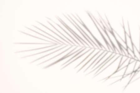 blur Palm tree shadow on white background