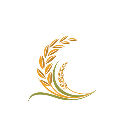 healthy grains: rice vector Illustration