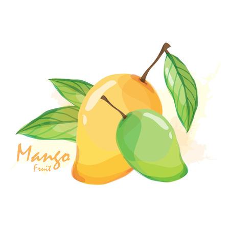 spalsh: mango fruit Illustration