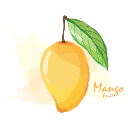 mango leaf: mango fruit Illustration
