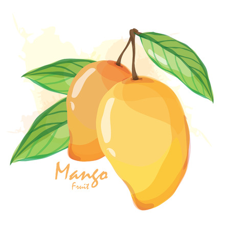 mango fruit Illustration