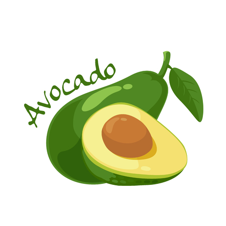 avocado: avocado vector illustration