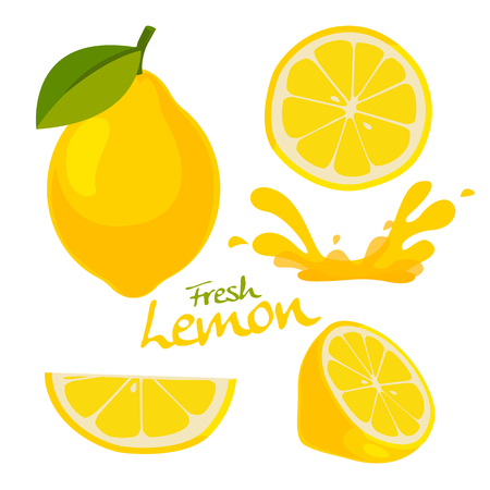 sliced fruit: fresh lemon vector Illustration