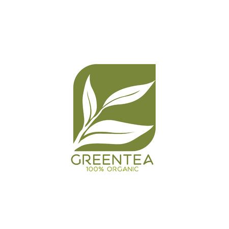 groene thee vector