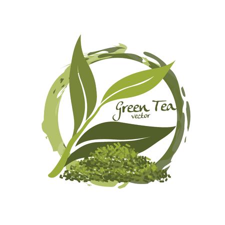 green tea vector Illustration