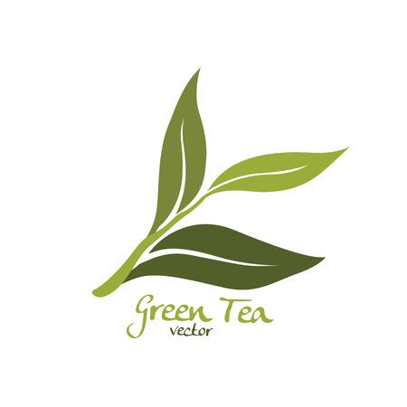 green plants: green tea vector Illustration