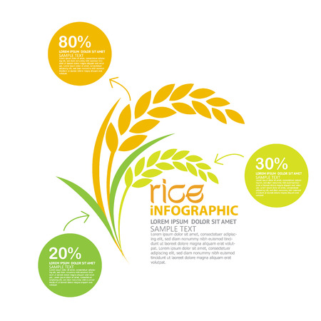 organic plants: rice vector Illustration