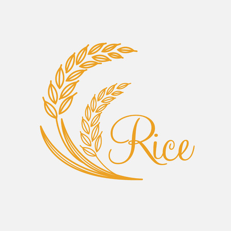 rice plant: rice vector Illustration