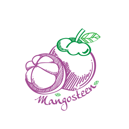 mangosteen: Mangosteen illustration vector Illustration