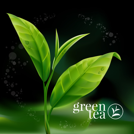 green tea leaf: Green tea leaf