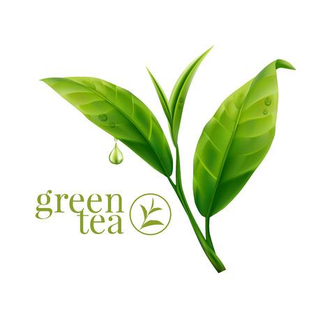 Zelený čaj listí Ilustrace