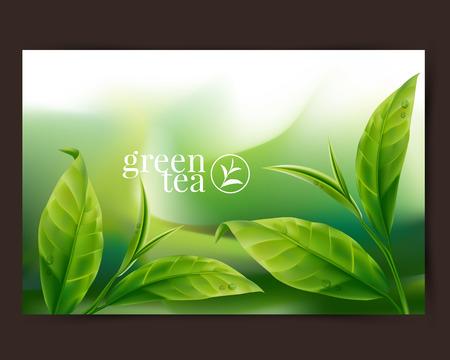 Foglia di tè verde Vettoriali