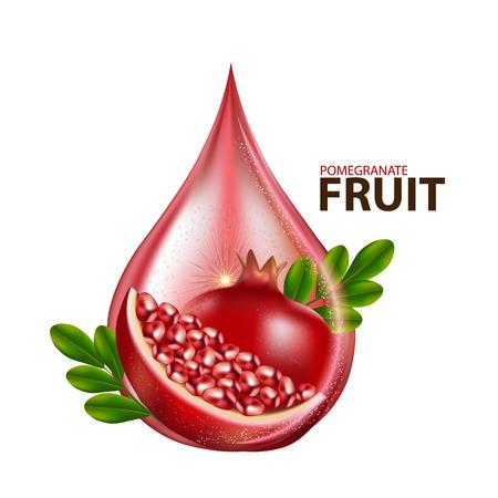 melograno frutta fresca Vettoriali